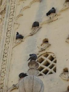 মসজিদ চত্ত্বরগুলো অবশ্য এখনও পায়রাদের জন্য নিরাপদ আস্তানা